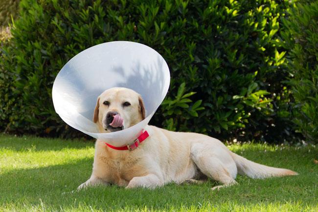 Dlaczego pies wygryza sobie sierść?