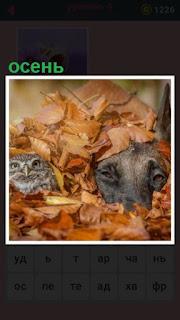 собака и сова спрятались осенью в листьях