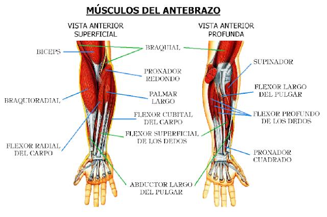 Cuerpo sano; recibo Osteopatía Profesional: septiembre 2016