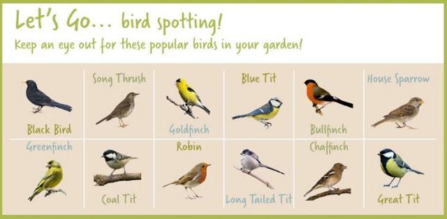 Wilko Wild Bird Range, bird spotting