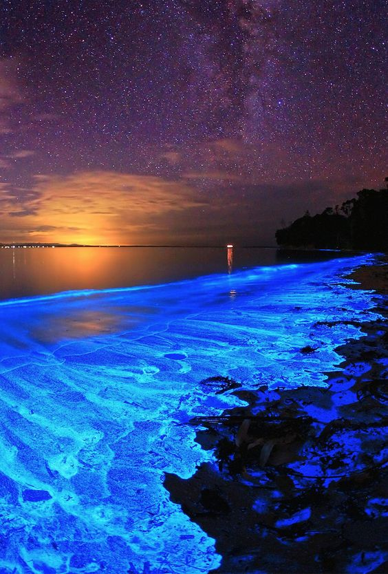 the bioluminescent noctiluca scintillans — an algae known otherwise as sea sparkle — of australia's jervis bay.