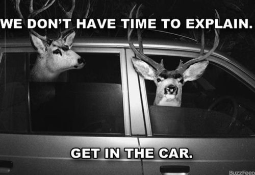 Funny Picture - Oh Dear, Deer: we don't have time to explain. Get in the car
