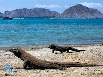 Paket Liburan Lengkap Ke Pulau Komodo, Paket Liburan Lengkap Ke Labuan Bajo