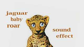 learn jaguar animal sounds