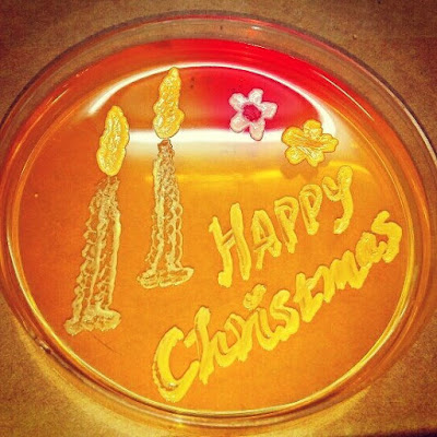 Petri plate art for Christmas