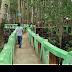 Pesona Aceh, Wisata Hutan Manggrove Kota Langsa