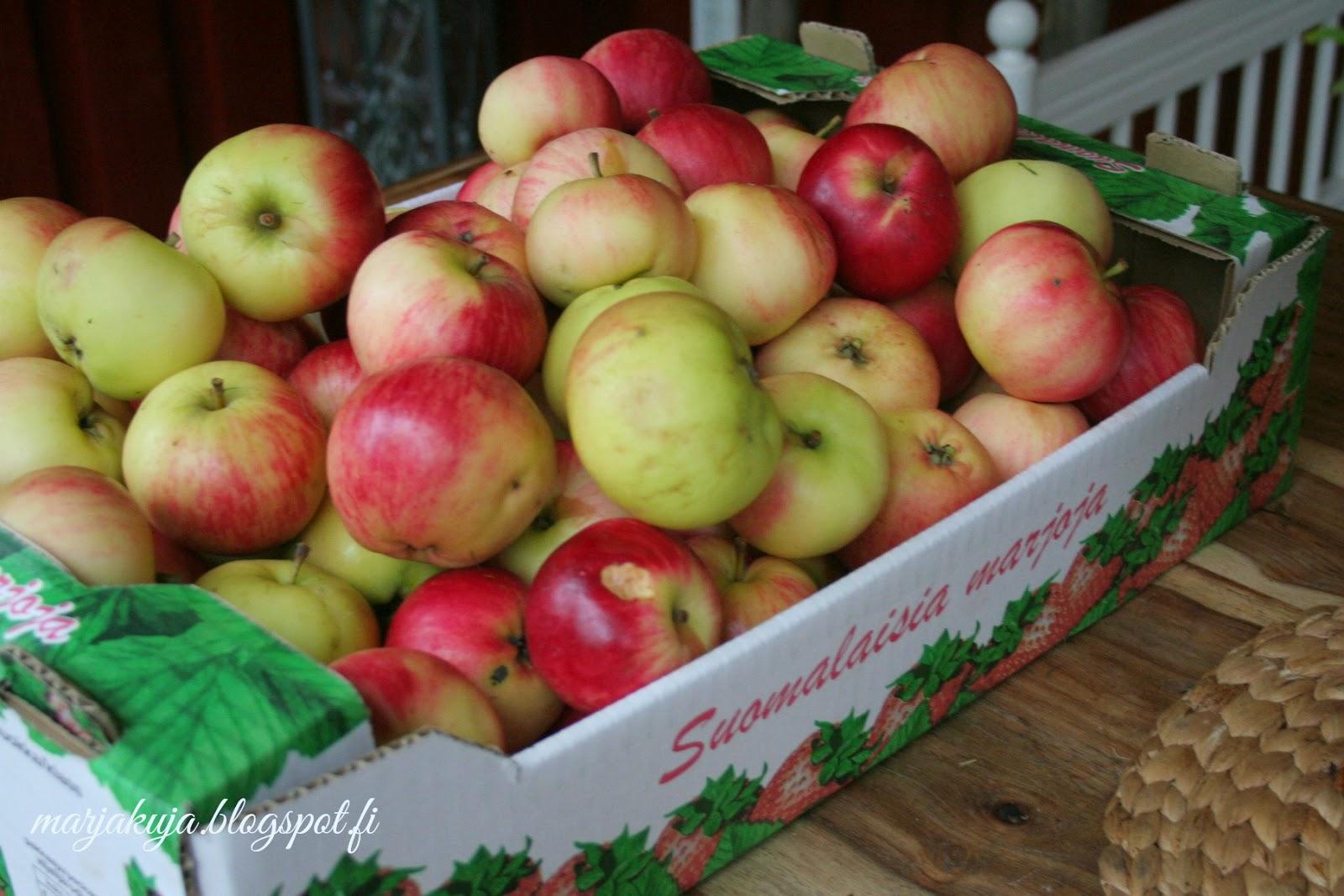 tuoreet omenat