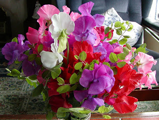flowers for flower lovers.: sweet-pea flowers.