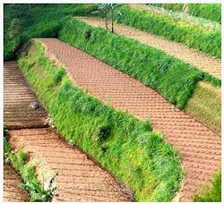Panduan Praktis Pengelolaan Tanah untuk Bertanam Sayuran