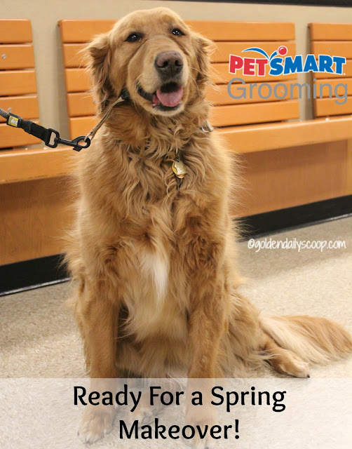 dog grooming, deshedding, golden retriever, PetSmart grooming