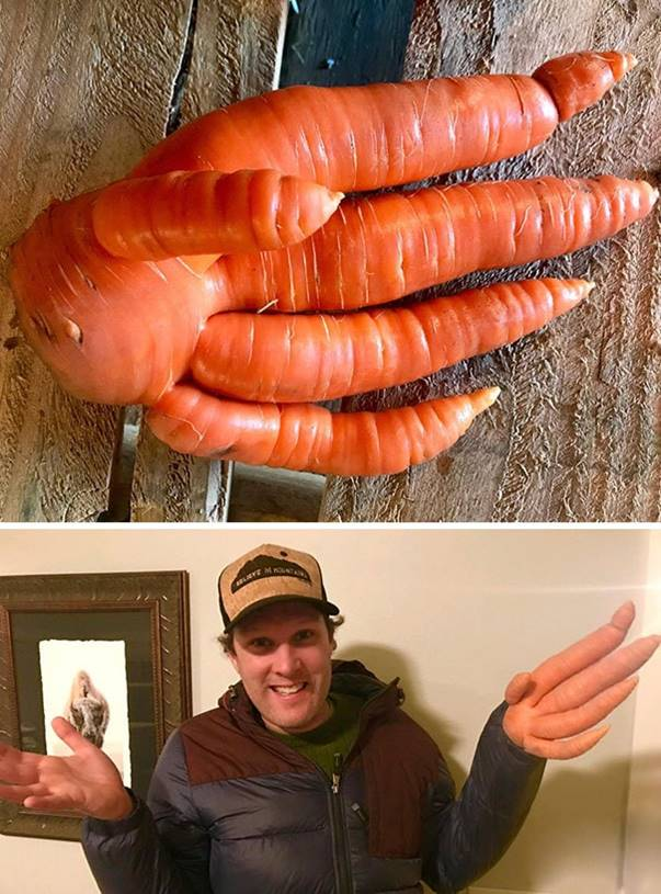 """""""Today we found this hand-carrot on the farm"""""""