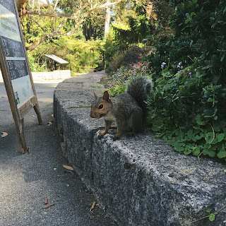 A picture of a friendly squirrel in Golden Gate Park, San Francisco