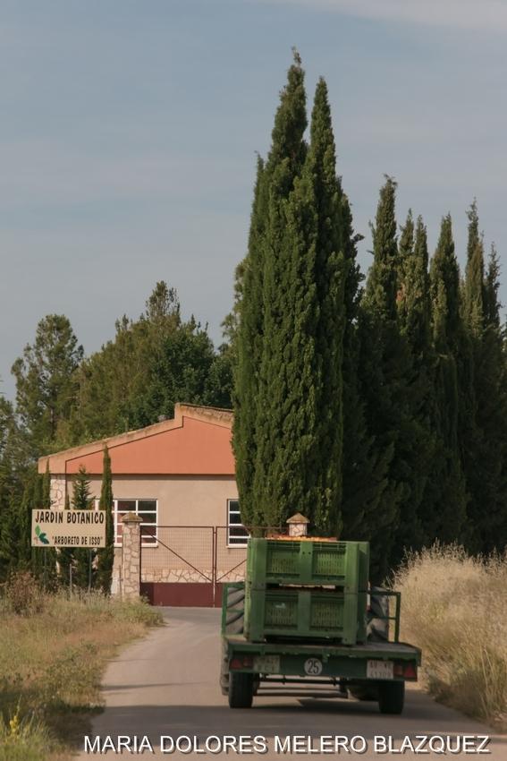 Recorriendo albacete isso jard n bot nico for Jardin botanico albacete