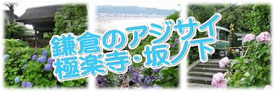 鎌倉アジサイめぐり:極楽寺・坂ノ下