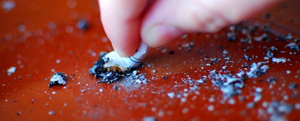 تربة زراعة «التبغ» تقدم علاج إدمان السجائر