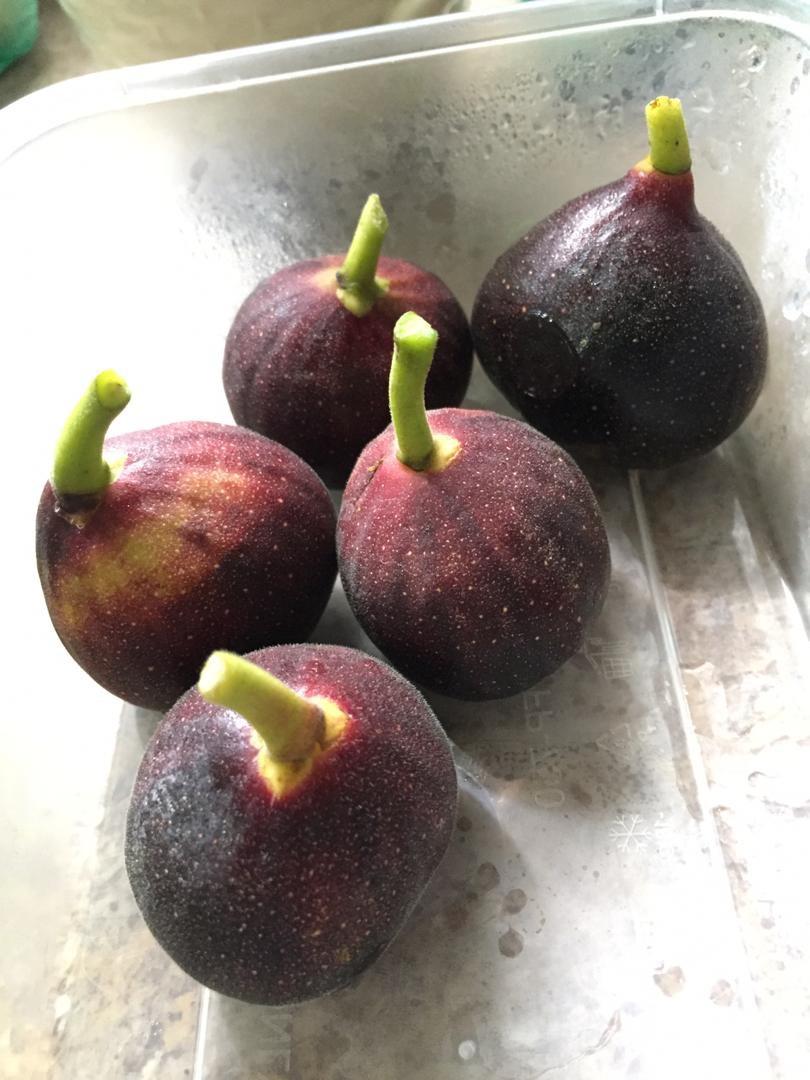 air rendaman kurma, khasiat kurma, kurma madu, khasiat madu, khasiat buah tin, persiapan ramadhan