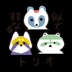 Raccoon dog, lesser panda and raccoon