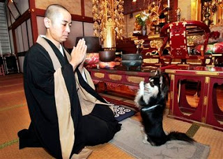 A Zen's Dog Praying
