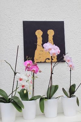 Pflegetips für Orchideen