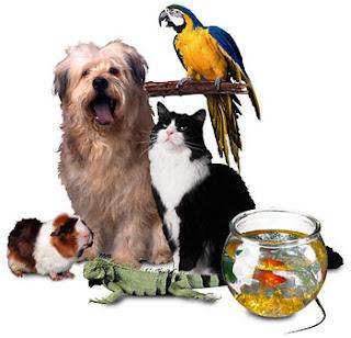 101 mascotas consejos para todo tipo de mascotas tipos - Todo para nuestras mascotas ...