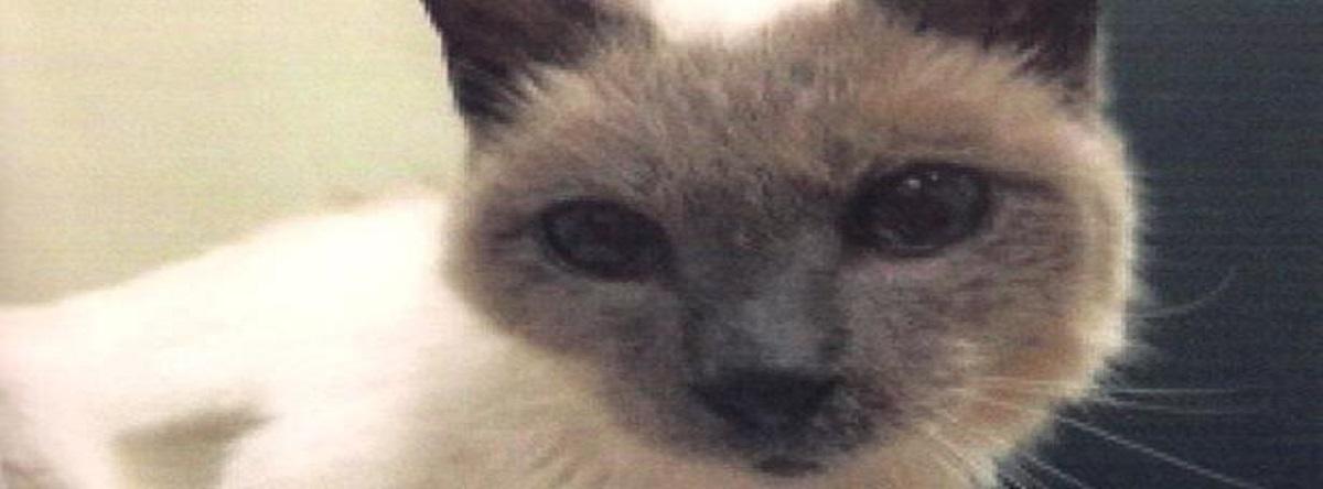 El gato con vida más viejo del mundo
