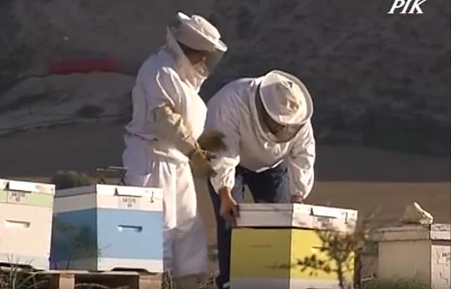 Ασχολήθηκαν επαγγελματικά με τη μελισσοκόμια και έκαναν 250 μελίσσια: Πως ξεκίνησαν και πως πέτυχαν στη κρίση..