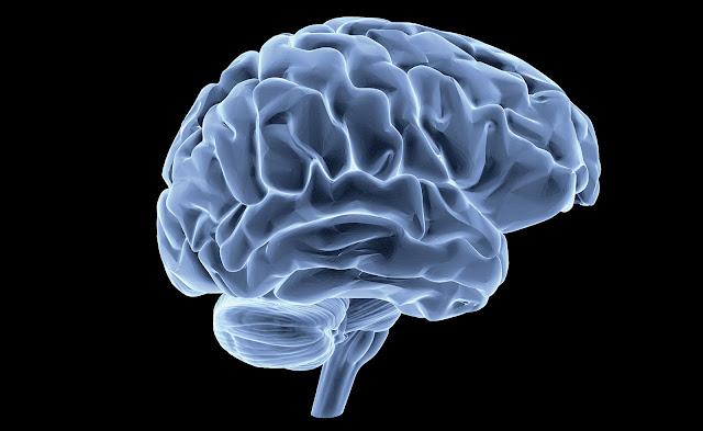 Image cerveau