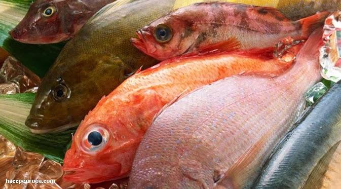 hewan laut dilarang ibu hamil