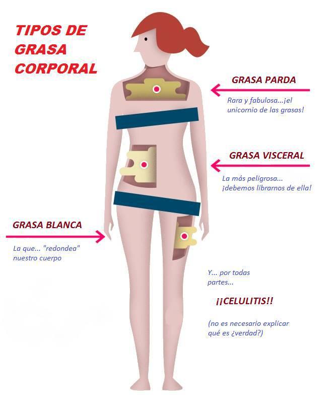 Como bajar grasa visceral