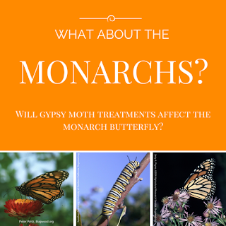 Will gypsy moth treatmens affect the monarch butterfly