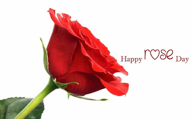 Happy Rose Day Wallpapers, rose day hd images