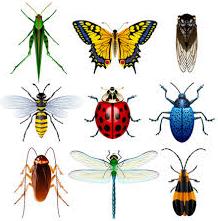 Ciri-Ciri Insecta (Serangga) dan Klasifikasinya