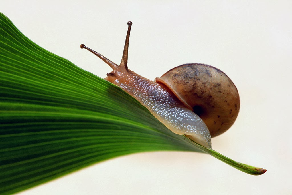 Cute N Sweet Hd Wallpapers Insects Hd Wallpapers Wallpaper Gallery