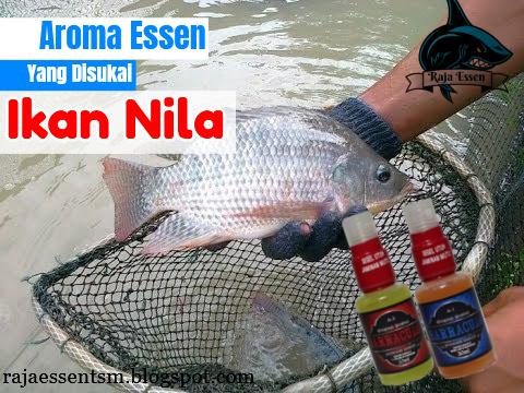 https://rajaessentsm.blogspot.com/2018/11/aroma-essen-yang-disukai-ikan-nila-dijamin-strike.html