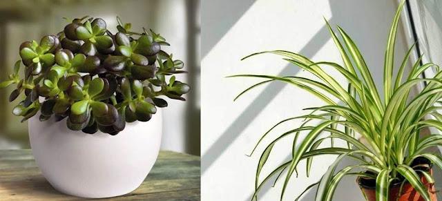 pareri cele mai sanatoase plante de apartament