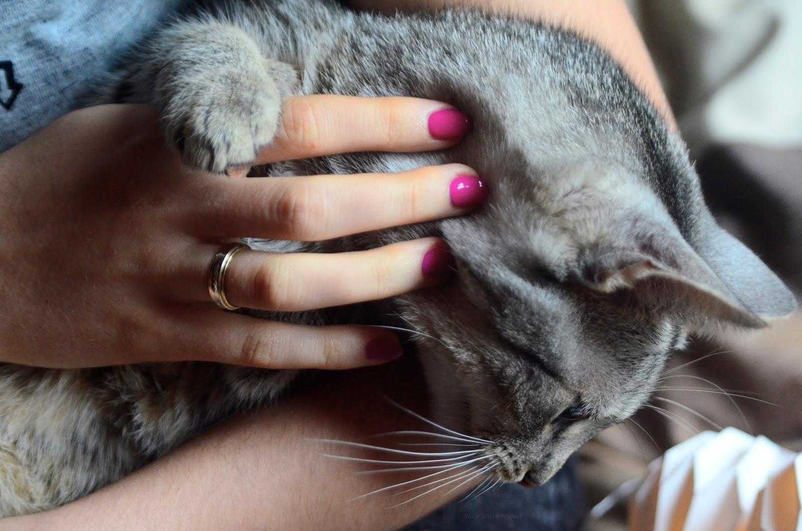 paznokcie | lakier | Semilac | hybrydy | manicure hybrydowy | mardi gras | kot