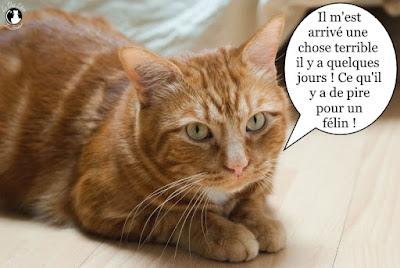 Beau chat orange !