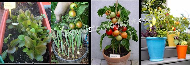 """""""Cultivar Frutales y Hortalizas en macetas-1"""""""