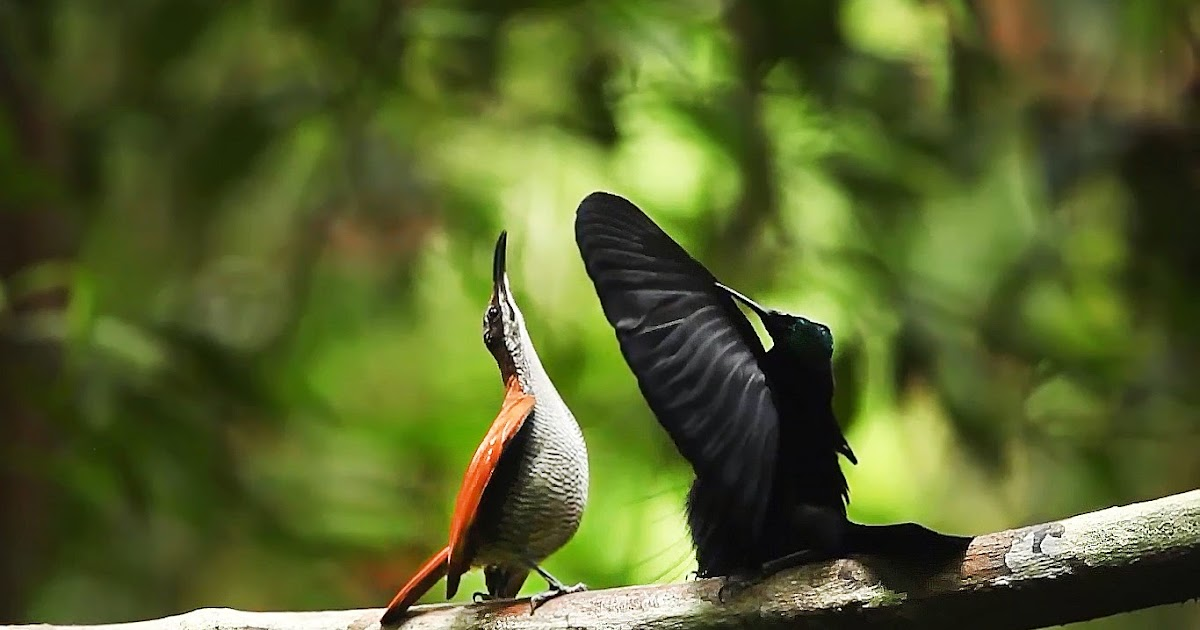 Birds Of Paradise Hd Wallpaper Dream Wallpapers