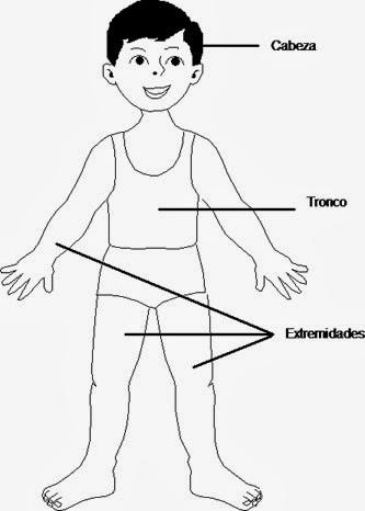 Conociendo mas sobre anatomia - 1 part 1