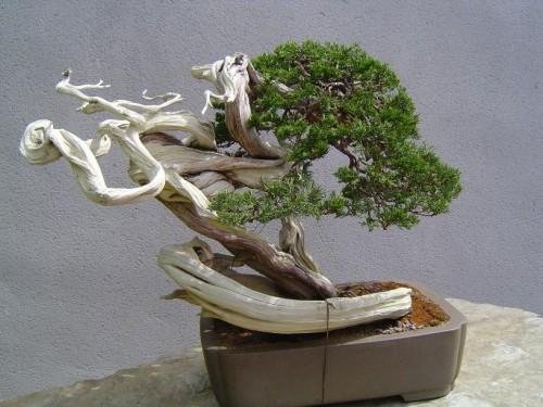 El rinc n del aikido bonsai for Vasi bonsai giapponesi