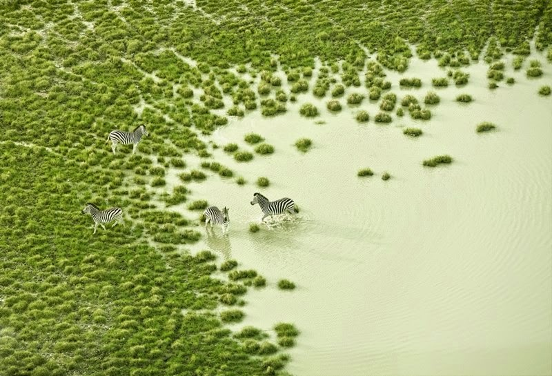 Incredible Aerial View of Botswana Wildlife