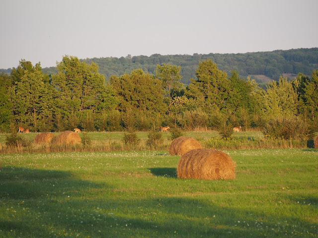 field with deer