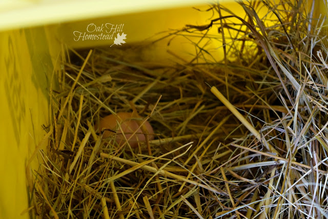 A small brown egg in a nestbox.