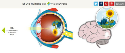http://www.visiondirect.es/ojo-humano