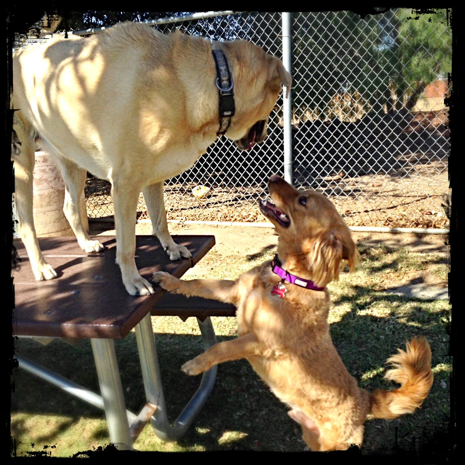 Meeting at the Dog Park, 11-9-2014 (The 3 Rs Blog)