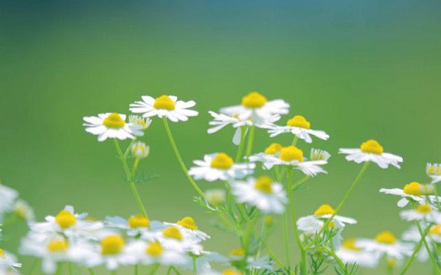 hình ảnh hoa đẹp nhất thế giới 4