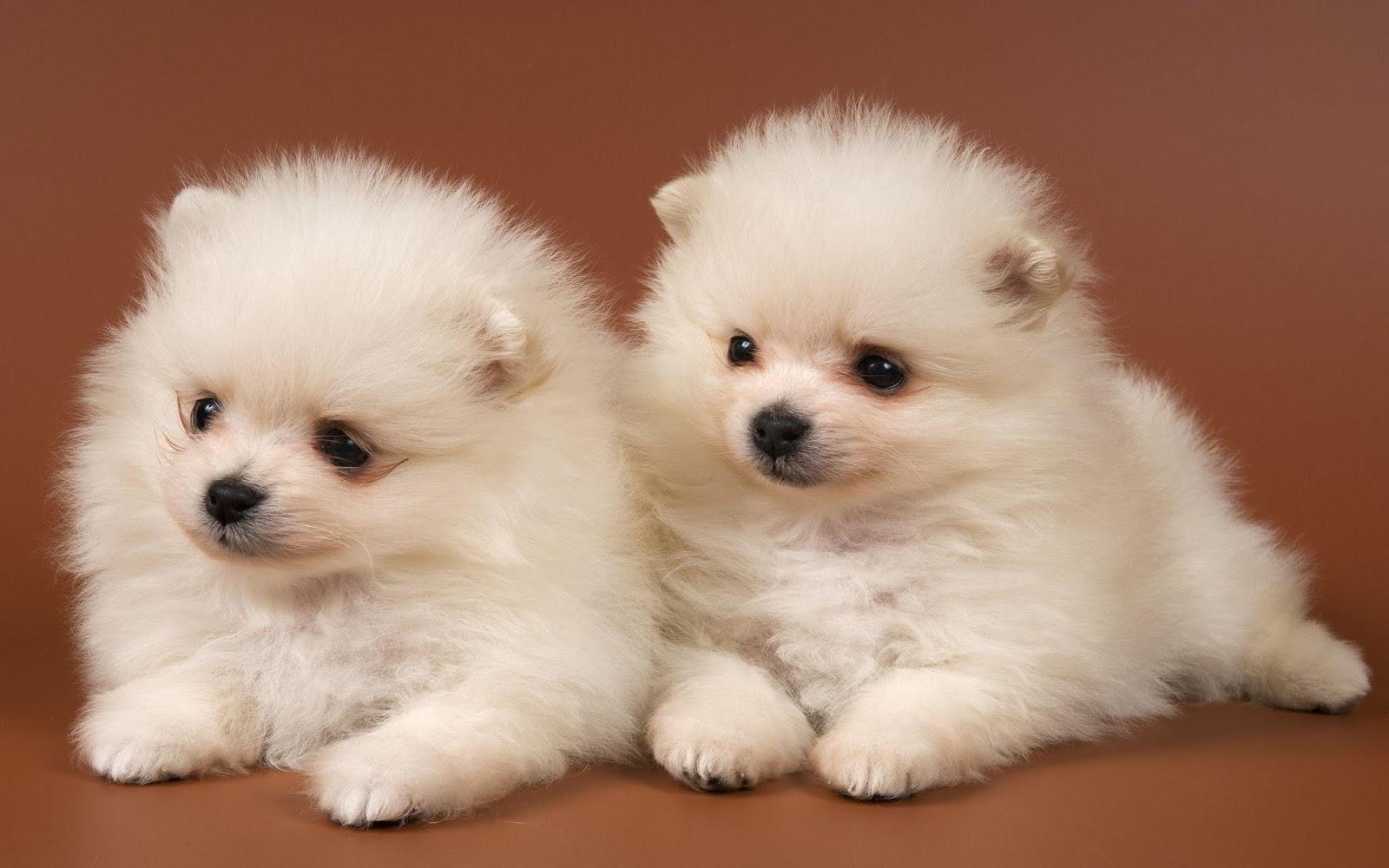 hình nền hai chú cún con dễ thương