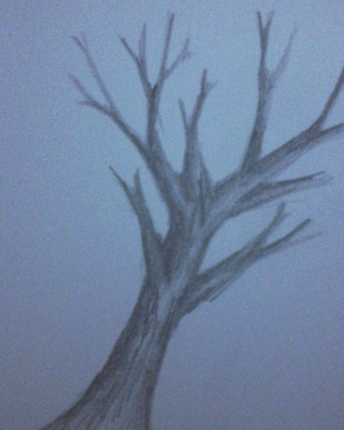 Galeri Gambar Sketsa Pohon Dengan Pensil Terbaru