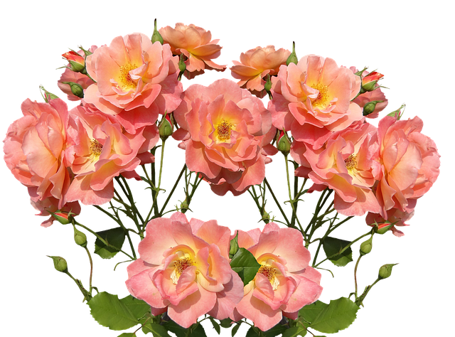 love rose flower images free download